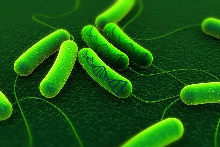 vi khuẩn hp có chữa khỏi không