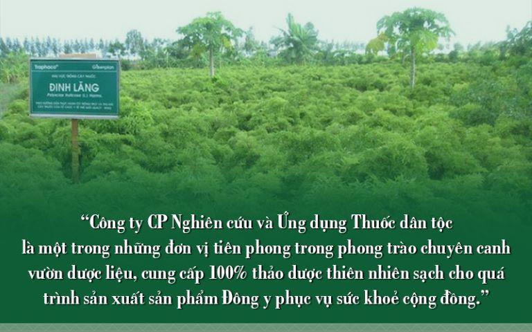 Vườn dược liệu sạch tại Thuốc dân tộc