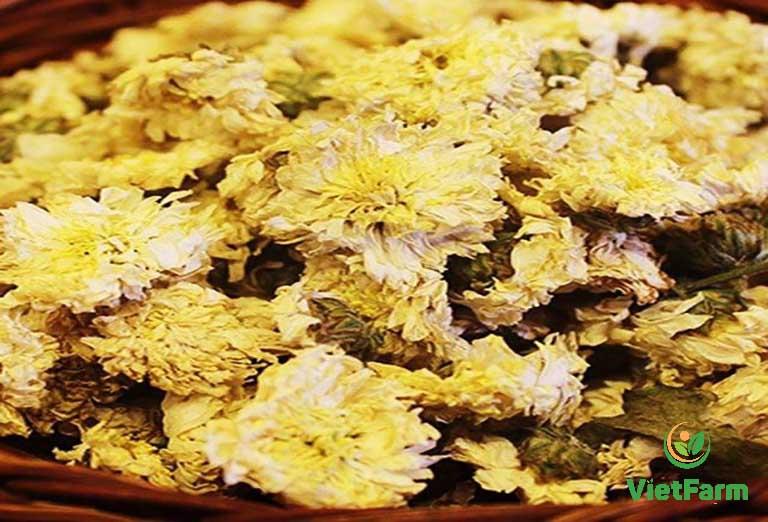 Hoa cúc được phơi khô làm trà
