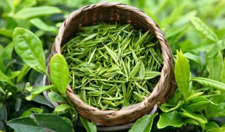 viêm lợi nên ăn trà xanh