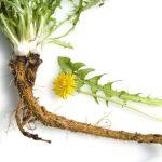 Điều trị u xơ tử cung bằng các cây thuốc nam