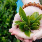 7 cây thuốc xông trị viêm xoang tốt nhất và lưu ý khi dùng