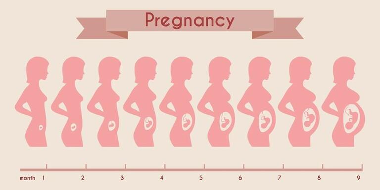 Có thai bao lâu thì bụng mới to?