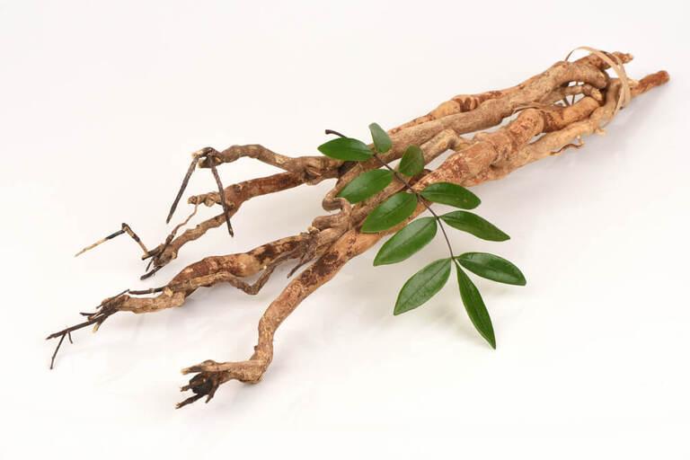 Các cây thuốc nam chữa vô sinh hiếm muộn