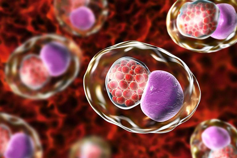 ý nghĩa xét nghiệm Chlamydia