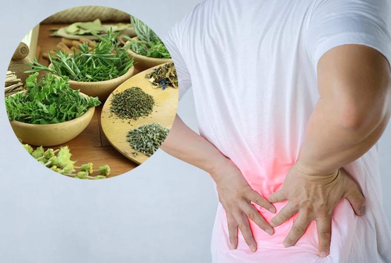 bài thuốc chữa đau lưng