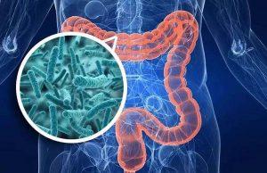 lợi khuẩn đường ruột