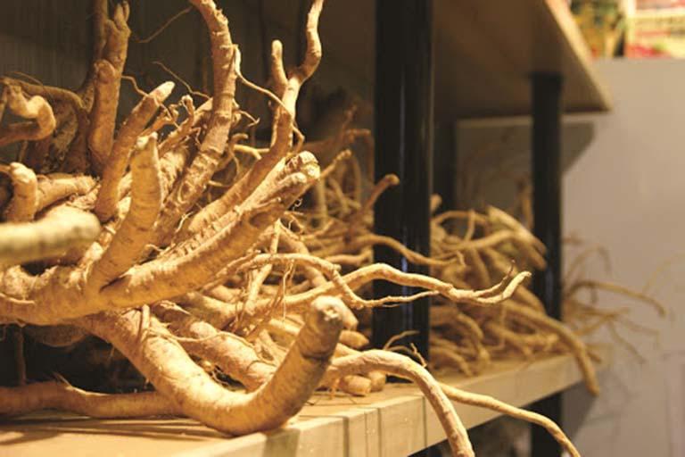 cách chữa viêm đại tràng bằng dân gian với rễ đinh lăng