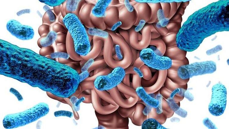 Vi khuẩn đường ruột là gì? Tính chất và điều cần biết