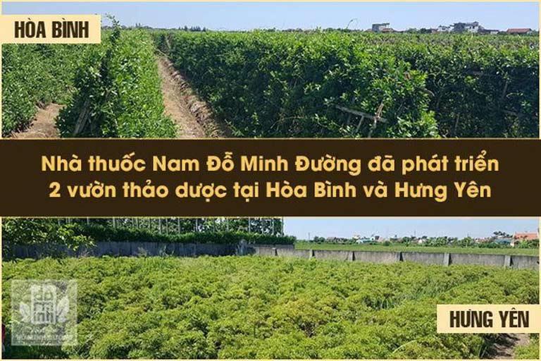 Thành phần thảo dược trong bài thuốc nam Đỗ Minh Đường đảm bảo sạch sẽ, nguồn gốc rõ ràng