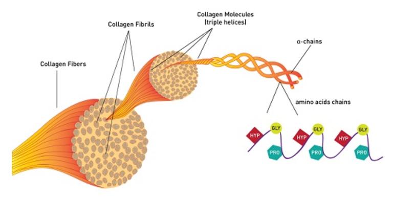 Uống collagen có hại thận không? Có tác dụng phụ gì?