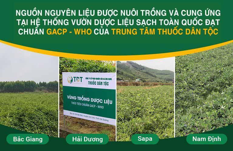 Thành phần bài thuốc đảm bảo sạch 100%, đáp ứng tiêu chuẩn GACP-WHO