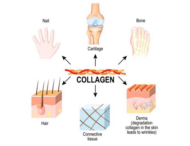 collagen có tác dụng gì