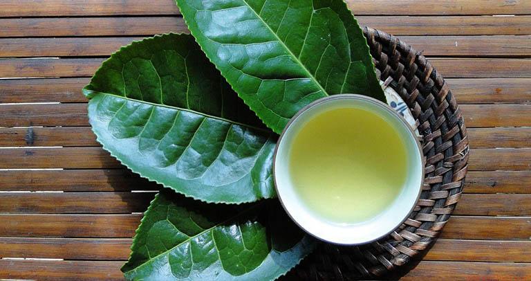 Bài thuốc Nam chữa gan nhiễm mỡ từ cây trà xanh