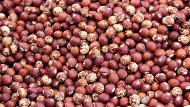 cây đậu săng có tác dụng gì